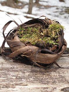 Bird Nest Making