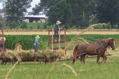 "I took this picture of the ""Amish Bailing Hay"" at Amish Country in Southern Ohio."
