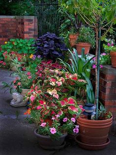 Outdoor Container Garden Ideas