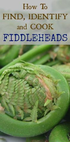 How to Find, Identify, and Cook Fiddleheads | www.fearlesseating.net/