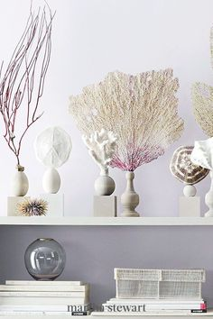 Create a cabinet of curiosities with a few favorite specimens and simple wooden bases: Sea fans, organisms similar to coral, make for gracefully graphic displays. Glue them and other interesting shells to repurposed pedestals. #marthastewart #crafts #diyideas #easycrafts #tutorials #hobby