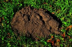Get Rid Of Moles & Burrowing Animals With Dawn Dish Soap - Frugal Blossom Mole Removal Yard, Moles In Yard, Getting Rid Of Gophers, Covered Patio Plans, Bug Spray Recipe, Weed Killer Homemade, Beautiful Home Gardens, Lawn Care Tips, Dawn Dish Soap
