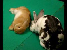 Rollin' Rabbits