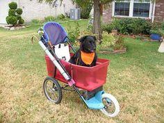 Home made big dog stroller.
