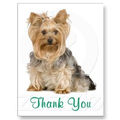 Thank You Yorkshire Terrier Puppy Dog Postcard