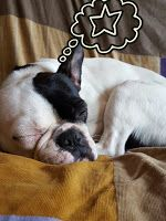 Hope the frenchie: How we help the humans