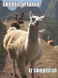 Image result for llama funny