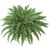 42 inch Self Shaped Artificial Boston Fern Plant: Unpotted