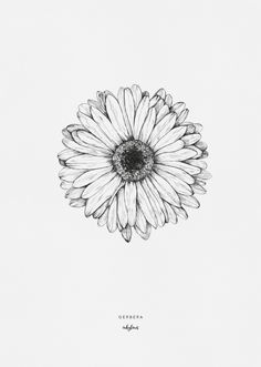 """Flower Drawing Discover Printables - Gerbera Drawing of the gerbera flower by inkylines. """"Because of you everything is more beautiful"""" thats where the gerbera stands for. Mini Tattoos, Black Tattoos, Body Art Tattoos, Small Tattoos, Sleeve Tattoos, Small Daisy Tattoo, White Daisy Tattoo, Owl Tattoos, Circle Tattoos"""
