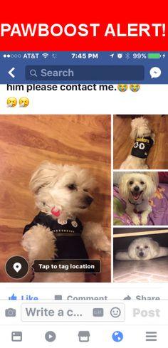 Please spread the word! Chico was last seen in Memphis, TN 38109.    Nearest Address: Near Laura Jo Cove & Appleville St
