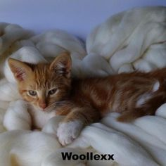 This Merino blanket by Woollexx made from 100% merino wool is extra soft and warm.Once your furbabies feel the softness and warmth of this gorgeous blanket, they will never want to get off of it!!Size Approx - 50x50 cm / 20x20 insColoursare not limited to what is shown here. View other colourson my website and advise me of which one you would likewww.woollexx.com.au★ Caring for your Merino Wool products:-Please do not wash. Dry Clean Only.-Merino wool is very flexible and elastic and ...