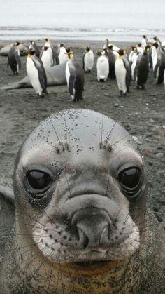 Foca y pingüinos
