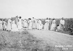"1918: At the ""Eastern Asylum for the Colored Insane"" in North Carolina, women participate in ""work therapy"" -- picking cotton.  Good historic overview of psychiatric institutions in the age of segregation at :  http://www.patdeegan.com/sites/default/files/files/separate_and_unequal.pdf"