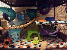 A Blog About Stinky Rats