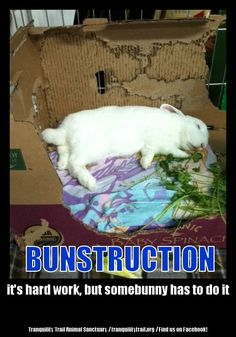 "Sparky passed out after doing ""bunstruction"". Bunny rabbit, funny bunny, sleeping bunny, trouble, hard work, playing, cardboard box."