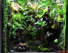 beau terrarium à dendrobate