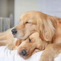 It can take awhile to find the perfect pillow!