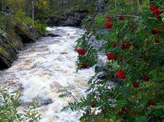 Oulanka National Park. Photo: Metsähallitus/Päivi Rosqvist