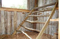 http://www.backyardchickens.com/forum/uploads/36856_011.jpg