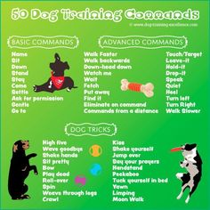 dog training commands, dog obedience commands, list of dog commands