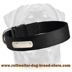 Wonderful nylon dog collar for identification purposes