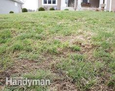 Lawn Care: How to Repair a Lawn (dead glass, luscious green grass)