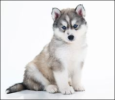 Aww... I want him