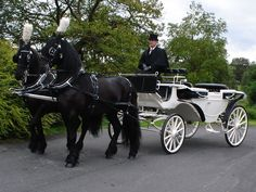 Beautiful Freisans pulling a white carriage.  Can someone please suprise me with this at my wedding??