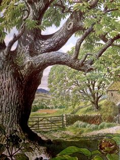 S R Badmin - Walnut and Dogwood - from the Ladybird Book of Trees Oil Painting Trees, Painting & Drawing, Watercolor Paintings, Landscape Drawings, Landscape Art, Landscape Paintings, Landscapes, Tree Illustration, Illustrations