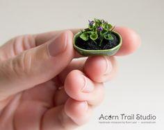 Miniature wild violets