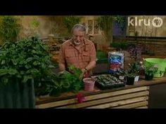 Learn how to propagate plants with cuttings. It's a good way to shape up overgrown plants, start new ones,or share with your friends. With frost tender plant. Cuttings, Propagation, Central Texas, Super Saver, Flower Gardening, Garden Seeds, Division, Saving Money, Outdoors