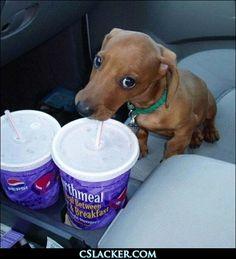 just a sip???