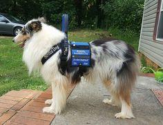 How To Teach Service Dog Tuck
