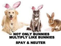 They all do it! Spay and Neuter your pets. --- If you and your fur baby are in the Canon City, CO, area, stop by the Humane Society of Fremont County. We offer spay and neuter services for cats and dogs. Take a look at our website for more information: http://www.humanesocietyfremontcounty.org/services/spay-neuter/