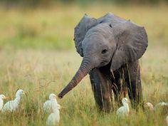 Happy World Elephant Day, everyone!
