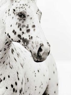 http://www.stephaniemoonfineart.com/#/horses-in-black-white/