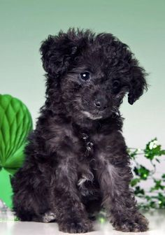 28518ec34 17 Best St. Patrick's Day images | Cut animals, Cute funny animals ...