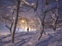 niseko, hokkaido.. japan Visit Japan, I Fall In Love, Snowboard, Skiing, Bliss, Scenery, Places To Visit, Powder, Asia