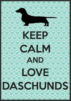 dachshund boss - Google Search