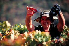 #making #wine