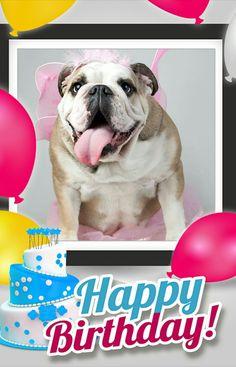 Happy birthday english bullldog