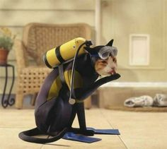 Cat wearing a Scuba diver costume for Halloween #CatCostumes #Halloween
