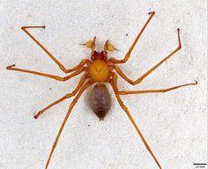 洞窟内に潜む悪夢?アメリカの洞窟で爪を持つ新種のクモが発見される