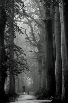 Forest walk by Liesbeth van der Werf
