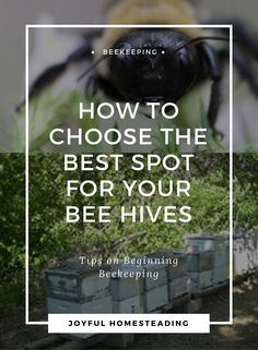Beekeeping beginners will need to find the best possible beehive location. Here's how.