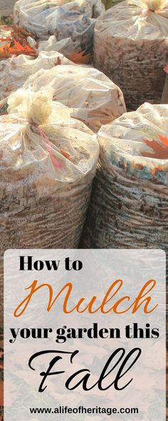 Mulching Gardens in Fall. Mulching just may be the saving grace of the gardening year! Find out mulching options, what it does for the soil and the best techniques. #gardening #gardeningtips Autumn Garden, Easy Garden, Edible Garden, Fruit Bearing Trees, Backyard Vegetable Gardens, Rose Of Sharon, Organic Gardening Tips, Organic Vegetables, Gardening For Beginners