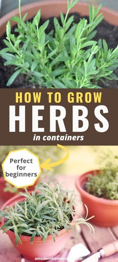Learn the benefits of container gardening with herbs! This great guide for beginners will help you navigate the best way to plant herbs in pots. Herb Garden Planter, Container Herb Garden, Diy Herb Garden, Herb Garden Design, Herb Planters, Herb Pots, Container Gardening Vegetables, Small Outdoor Herb Garden Ideas, Herbs In Containers