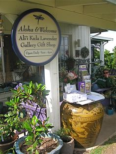Ali'i Kula Lavender Farm Gallery Gift Shop - very cool place to go and enjoy a lavender scone and a cup of lavender tea!