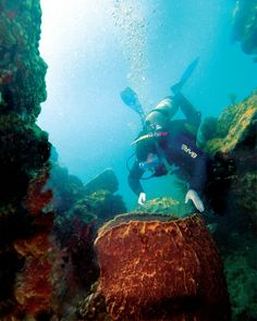 Scuba Diving Montserrat