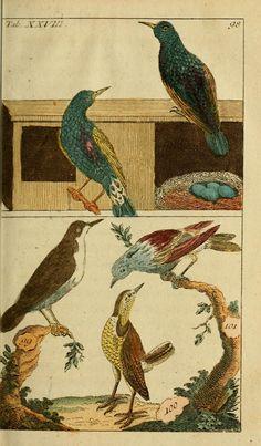 T 2 - Unterhaltungen aus der Naturgeschichte. - Biodiversity Heritage Library
